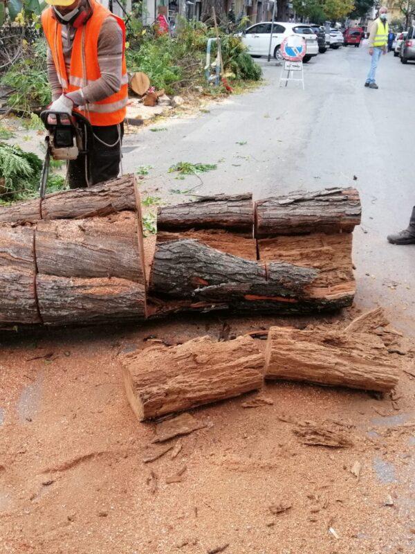 """Abbattimento alberi pericolanti nella villetta San Castrense """"Rimosso imminente pericolo"""""""
